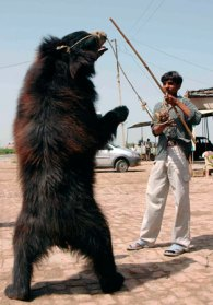 Dancing bear in North India