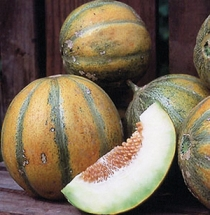 Indian melon