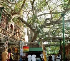 Mahabodhi Tree