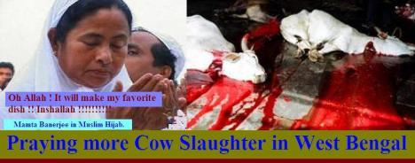 Begum Mamata Banerjee endorses cow slaughter
