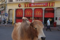 Cow & McDonald's