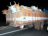 Cattle trafficking to Kerala