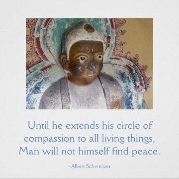 Lord Buddha & Albert Shweitzer's Compassion Quote