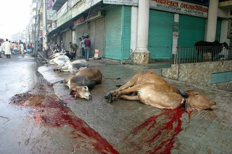Halal cow slaughter in Andhra Pradesh.