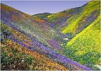 Valley of Flowers in  Himalayas