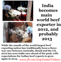 Indian Beef Export