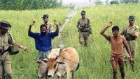 BSF catch cattle smugglers on the Bangla border.