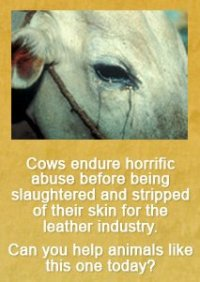 Yes, cows can cry!