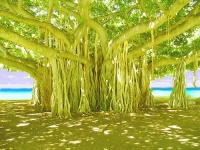 The banyan tree with its many trunks symbolises the organic unity of Hinduism.
