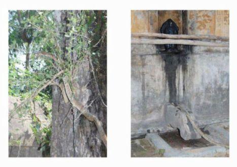 Cobra offering bilva leaves to lingam - 1