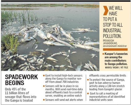 Dead fish in the Ganga