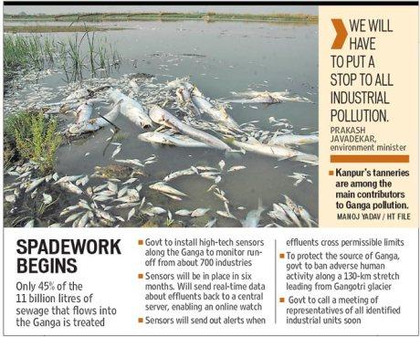 Dead fish in the Ganga