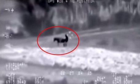 ISIS jihadi copulating with a donkey.