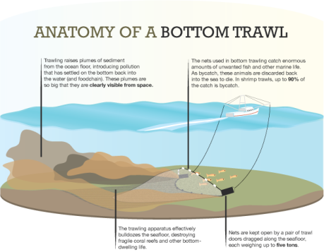 Bottom Trawling