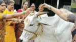 Cow Puja