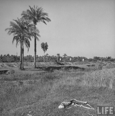 Churchill's Bengal famine of 1943