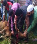 Cow Slaughter Srinagar 2015