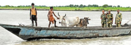 Cattle retrieved from smugglers by security forces on the border in the Dhubri sector of Assam