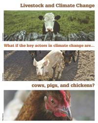 Cow, Pig & Chicken