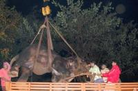 Death of the Rameswaram Temple elephant Bhavani