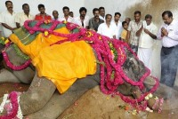 Death of the Thanjavur Big Temple elephant Vellaiyammal