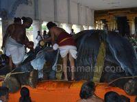 Death of the Thirukadaiyur AmirdhakadeswararTemple elephant Abirami