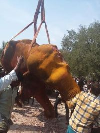 Death of the Virudhunagar Valasubramaniaswami Temple elephant Sulochana