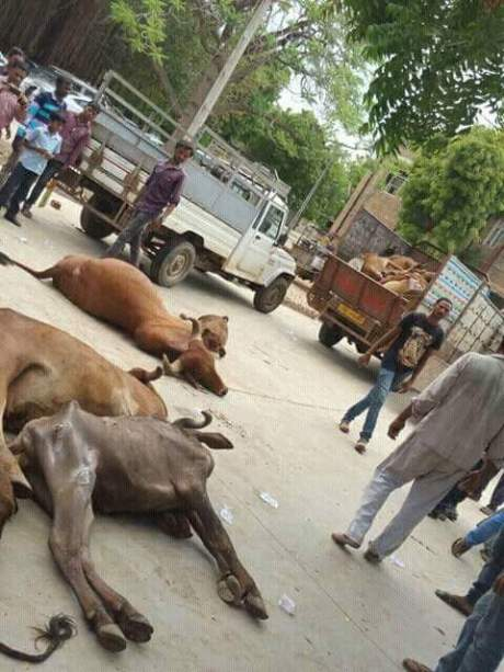 Dalits protest ill treatment by leaving the carcasses of dead cows at Gujarat government offices