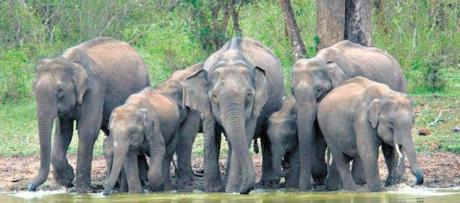 Elephants in Tamil Nadu