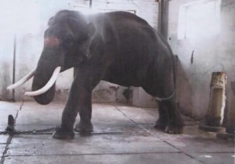 Elephant Mariappan of Samayapuram