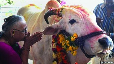 Cow Namaskar