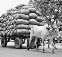 Bullock with overloaded flatbed wagon