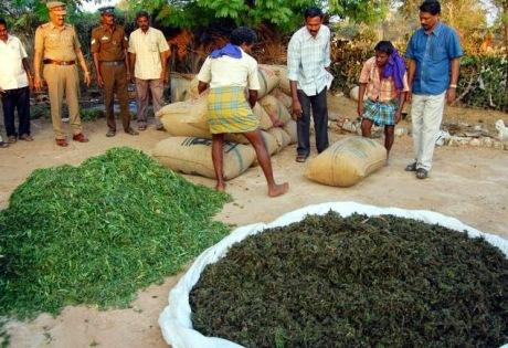 Confiscated ganja in Tamil Nadu