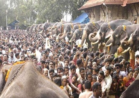 Elephants at Guruvayur Temple