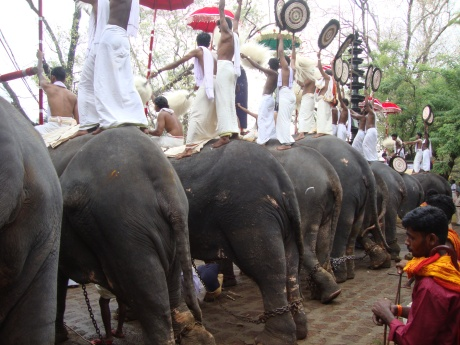 Elephants chained on four legs, made to stand 10 hours at Thrissur Pooram Festival