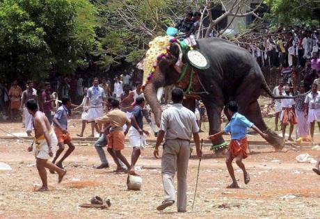 Elephant running amuck at festival
