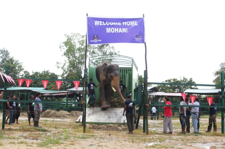 Mohan the free elephant