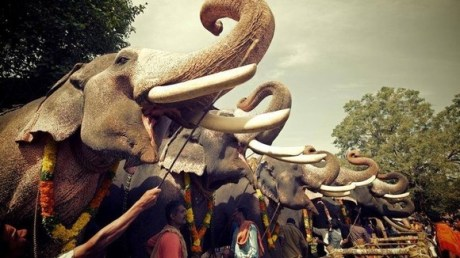 Elephant head-lifting competition in Kerala