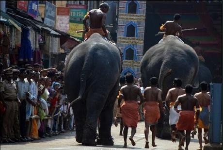 Elephant race in Guruvayur