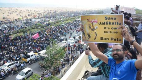 Chennai Protests Jallikattu