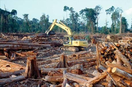 Logging in India