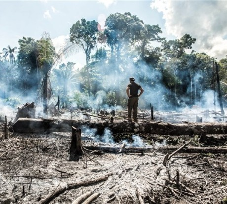 Amazon Fires (2019)