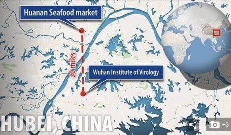 Wuhan wet market - virus lab graph