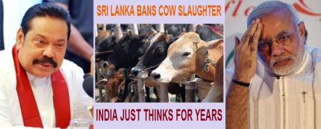 Sri Lanka cow slaughter ban.