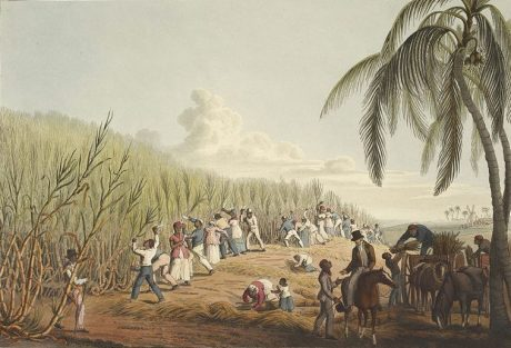 Slaves cutting sugar cane in Antigua (1823).