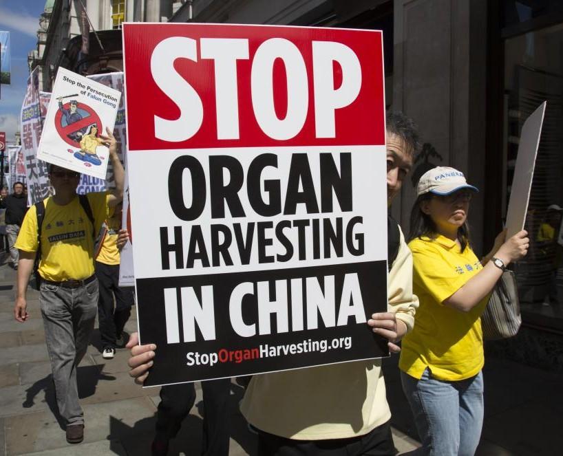 organ-harvest-china
